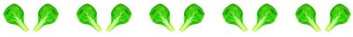 bande feuilles
