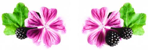 fleur de mauve et mûres sauvages